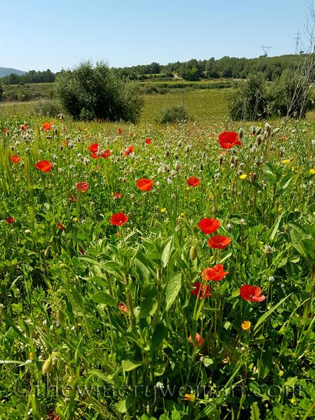 Wildflowers3_4.28.18_TWW