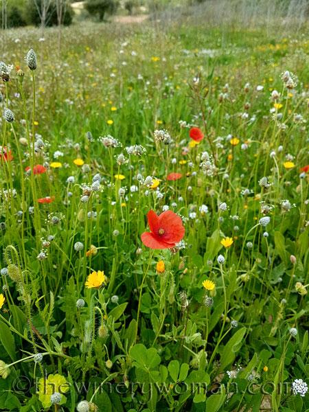 Wildflowers4_4.10.18_TWW