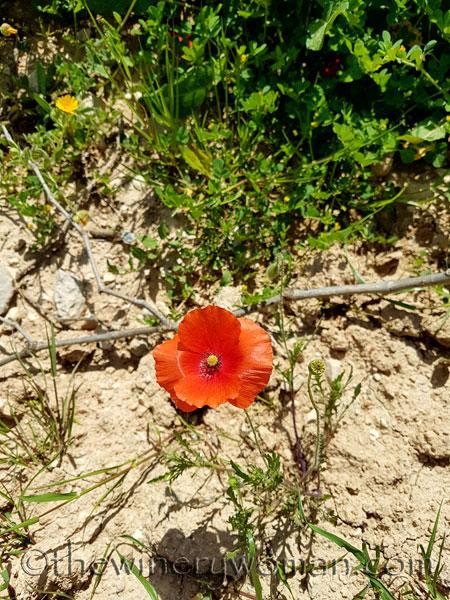 Wildflowers4_4.28.18_TWW