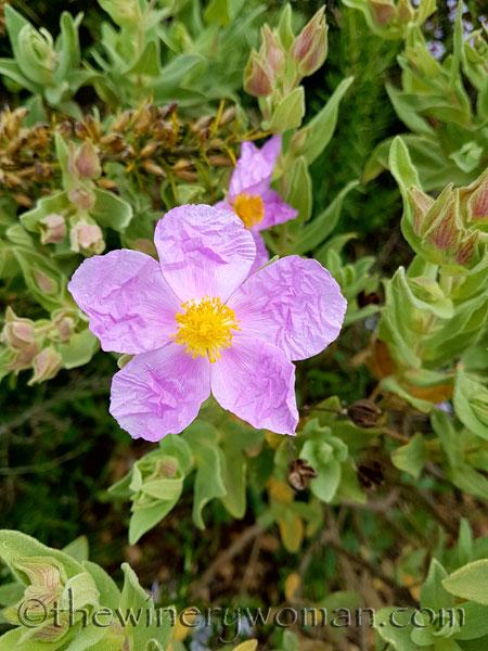 Wildflowers5_4.10.18_TWW