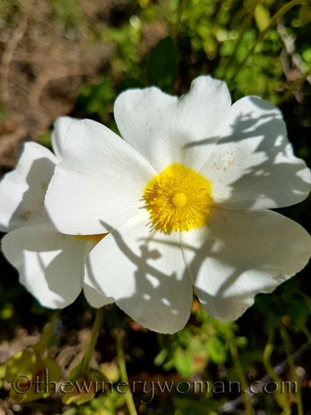Wildflowers6_4.28.18_TWW