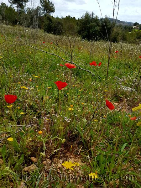 Wildflowers7_4.10.18_TWW