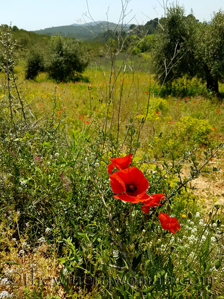 Wildflowers7_4.28.18_TWW