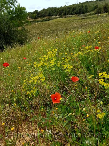 Wildflowers8_4.10.18_TWW