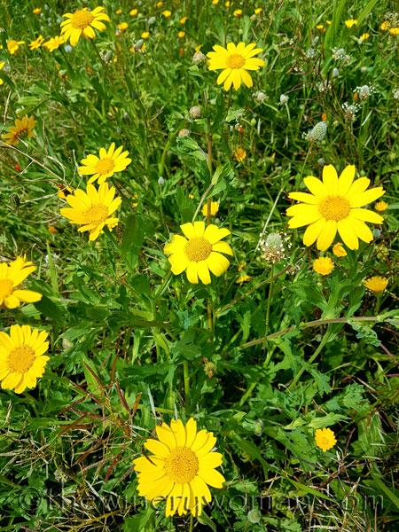 Wildflowers9_4.10.18_TWW