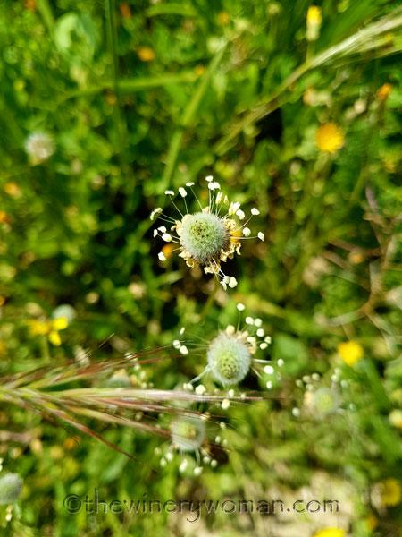 Wildflowers9_4.28.18_TWW
