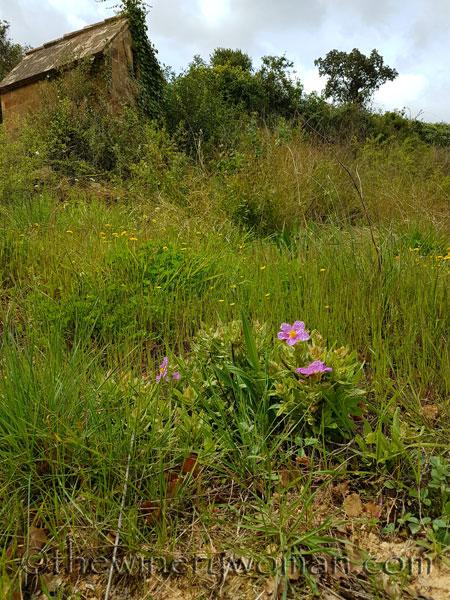 Wildflowers_4.10.18_TWW