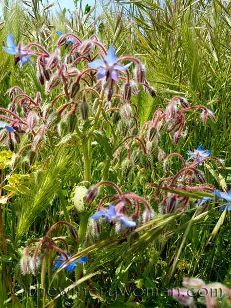 Wildflowers_4.28.18_TWW