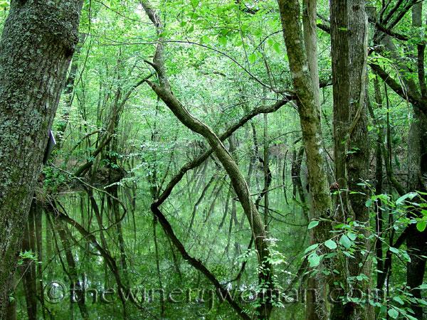 BeaverCreek_Cobbtown_GA_2007_TWW