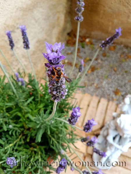 Lavender3_4.29.18_TWW