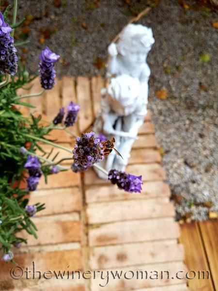 Lavender4_4.29.18_TWW