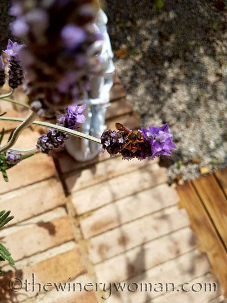 Lavender5_4.29.18_TWW