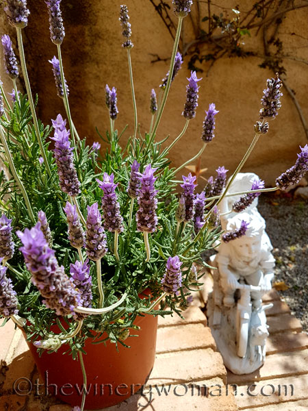Lavender8_4.29.18_TWW