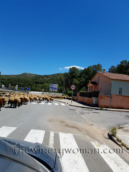 Sheep15_5.2.18_TWW