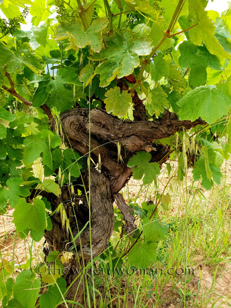 Twisted-Vineyard17_5.27.18_TWW