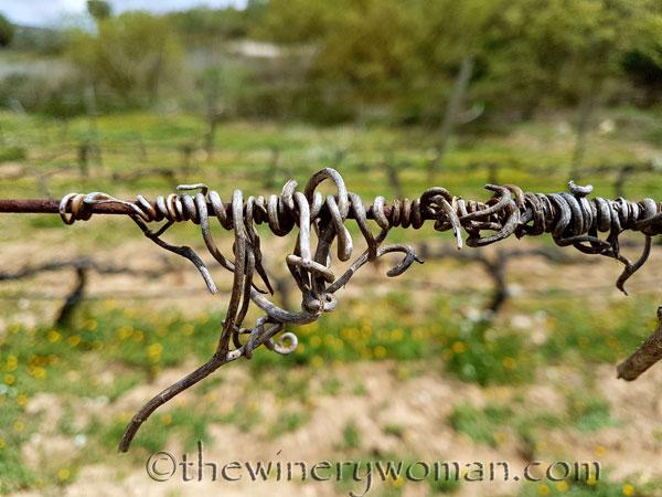 Vines-awakening6_4.10.18_TWW