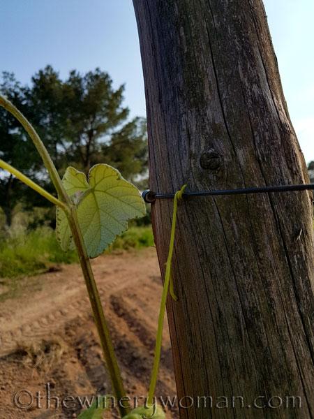 Vines-holding-on7_5.17.18_TWW