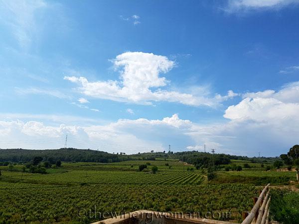 Vineyard-walk3_5.8.18_TWW