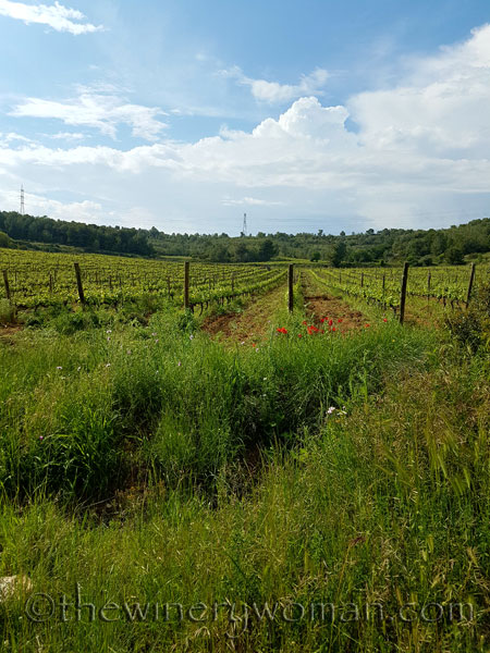 Vineyard-walk9_5.8.18_TWW