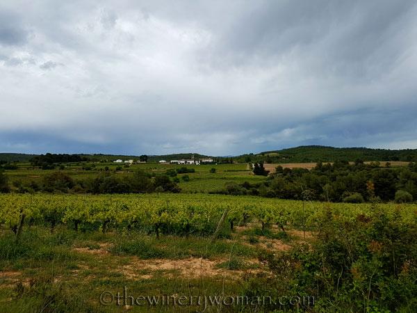 Vineyard10_5.3.18_TWW