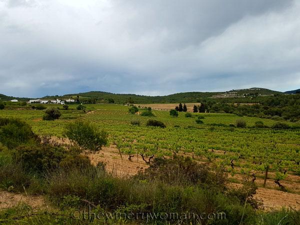 Vineyard15_5.3.18_TWW