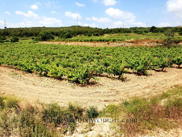 Vineyard4_5.28-29.18_TWW