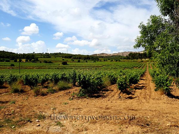 Vineyard6_5.28-29.18_TWW