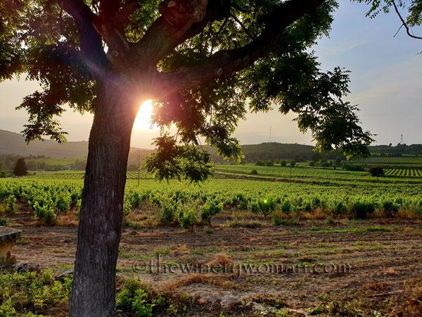 Vineyard_Sunlight2_5.27.18_TWW