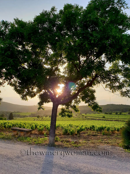 Vineyard_Sunlight_5.27.18_TWW