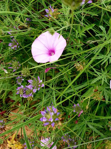 Wildflowers_Vineyard8_5.28.18_TWW