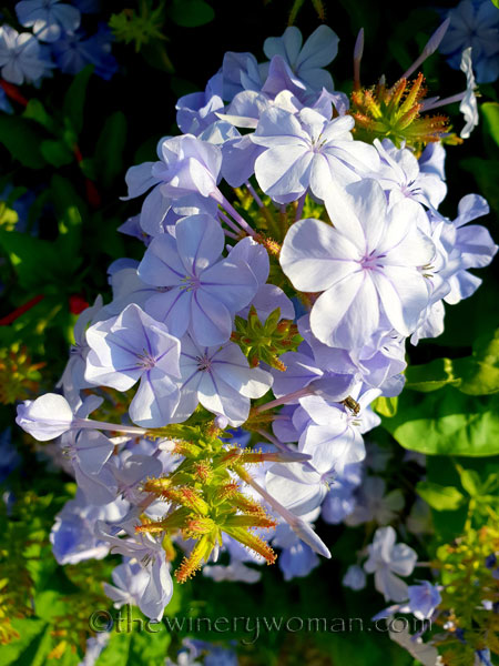 Flower_6.20.18_TWW