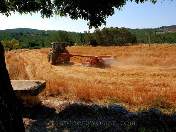 Hay_Harvest4_6.30.18_TWW
