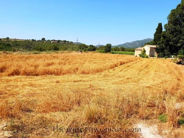 Hay_Harvest5_6.30.18_TWW