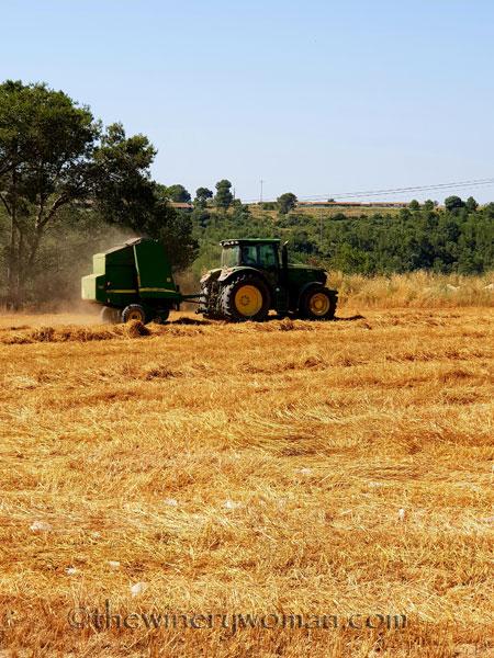 Hay_Harvest8_6.30.18_TWW