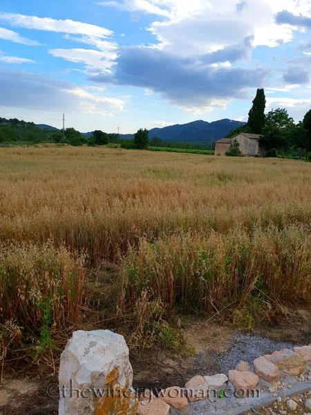 Hay_Harvest_6.30.18_TWW