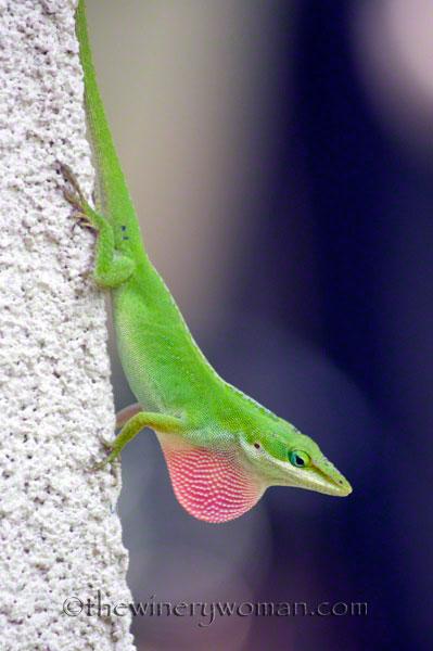 Lizard-1858_TWW