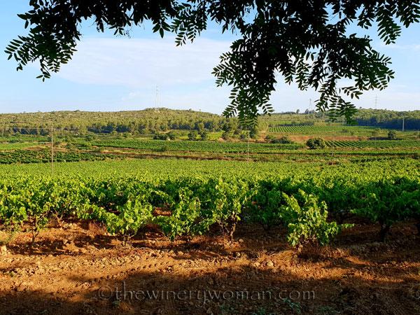 Vineyard6_6.29.18_TWW