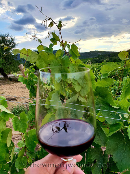 Wine_in_Vineyard8_6.12.18_TWW