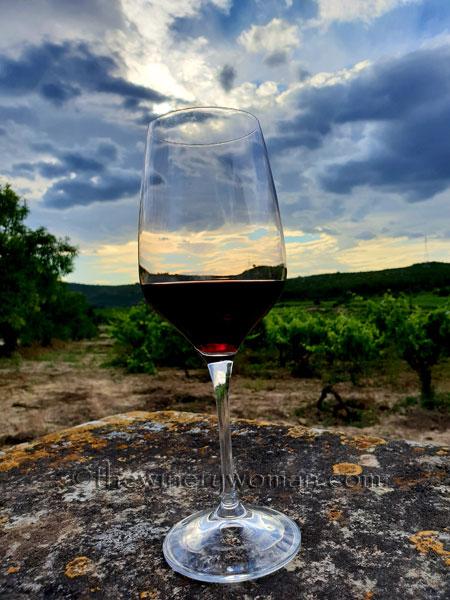 Wine_in_Vineyard9_6.12.18_TWW