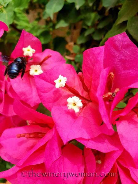 Bees2_7.27.18_TWW