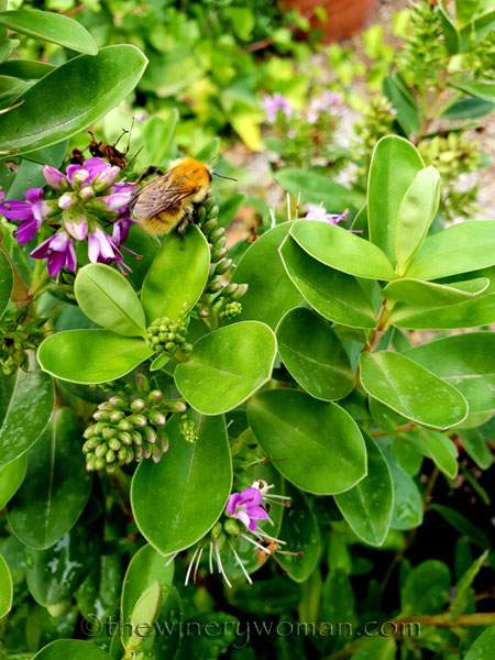 Bees3_7.27.18_TWW