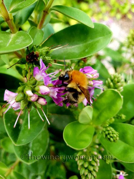 Bees4_7.27.18_TWW