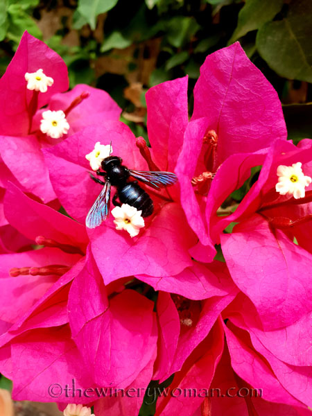 Bees_7.27.18_TWW