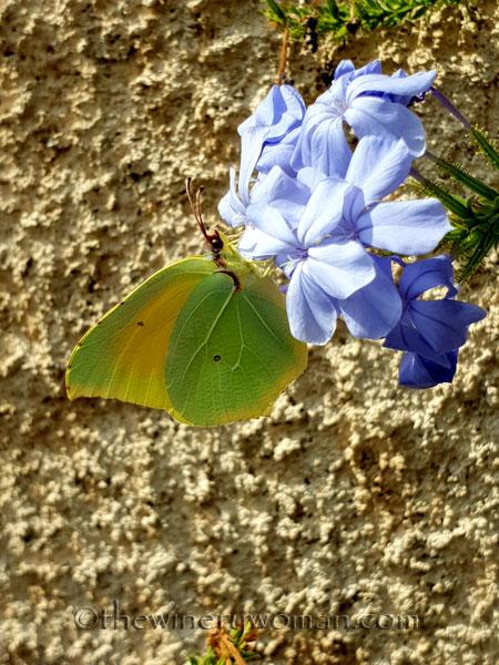 Butterfly2_7.28.18_TWW
