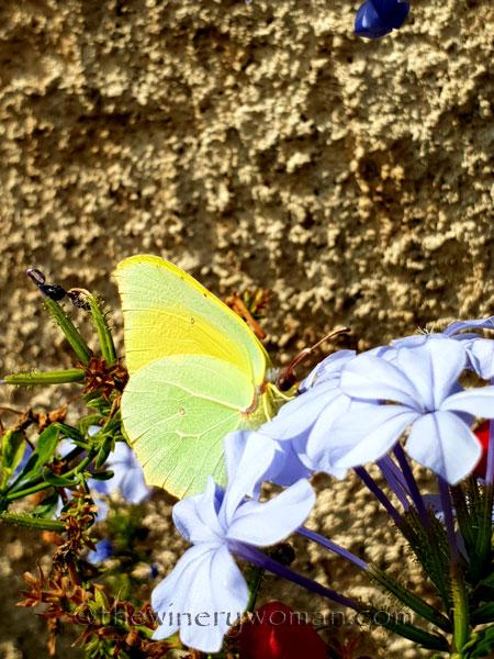 Butterfly3_7.28.18_TWW