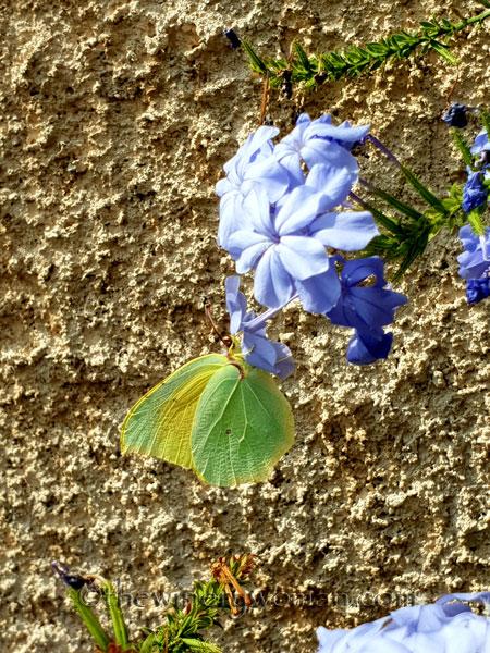Butterfly_7.28.18_TWW
