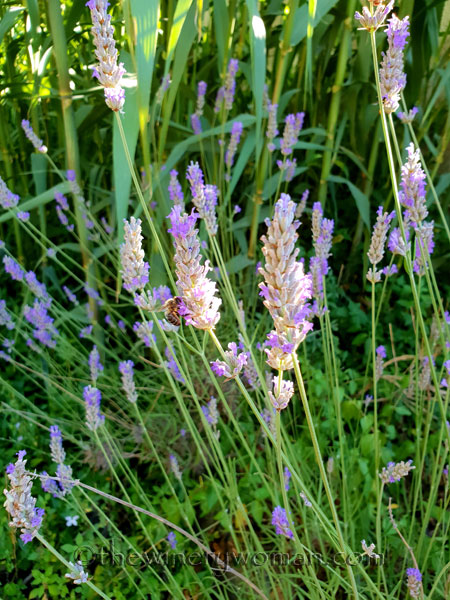 Lavender1_7.13.18_TWW