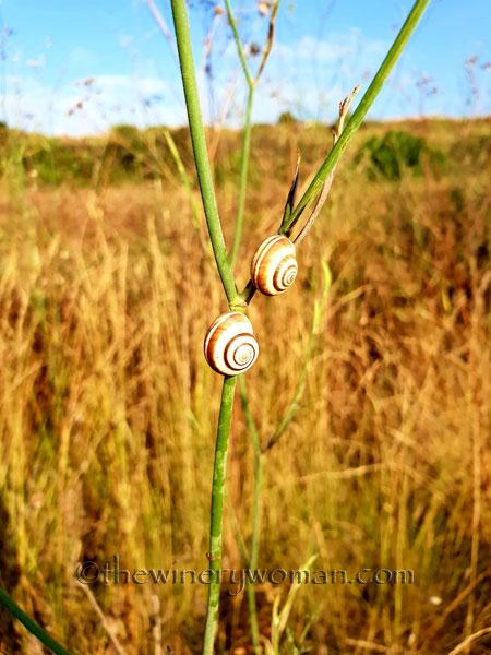 Snails5_7.29.18_TWW
