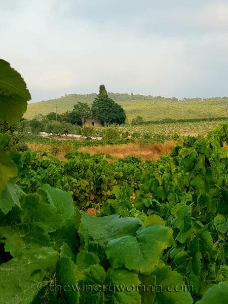 Vineyard10_7.15.18_TWW
