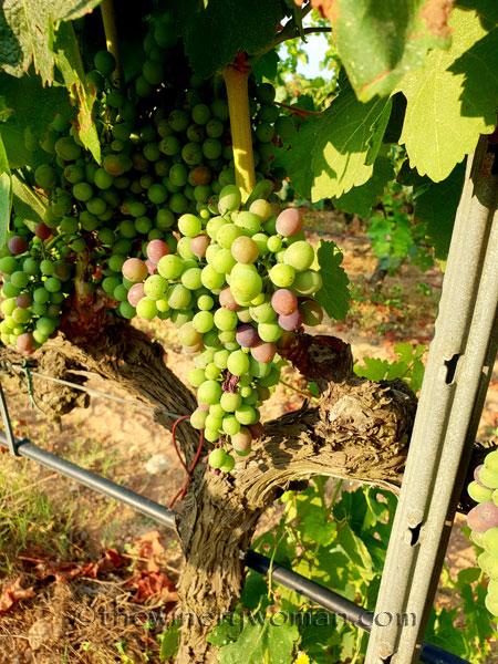 Vineyard17_7.29.18_TWW